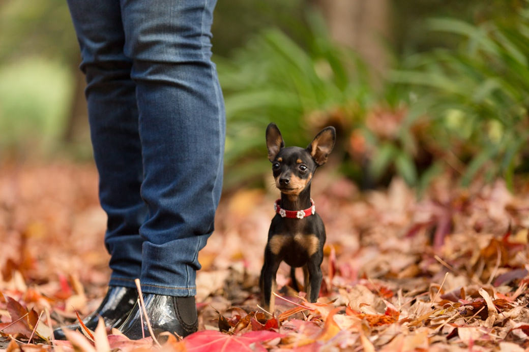 central coast dog photographer