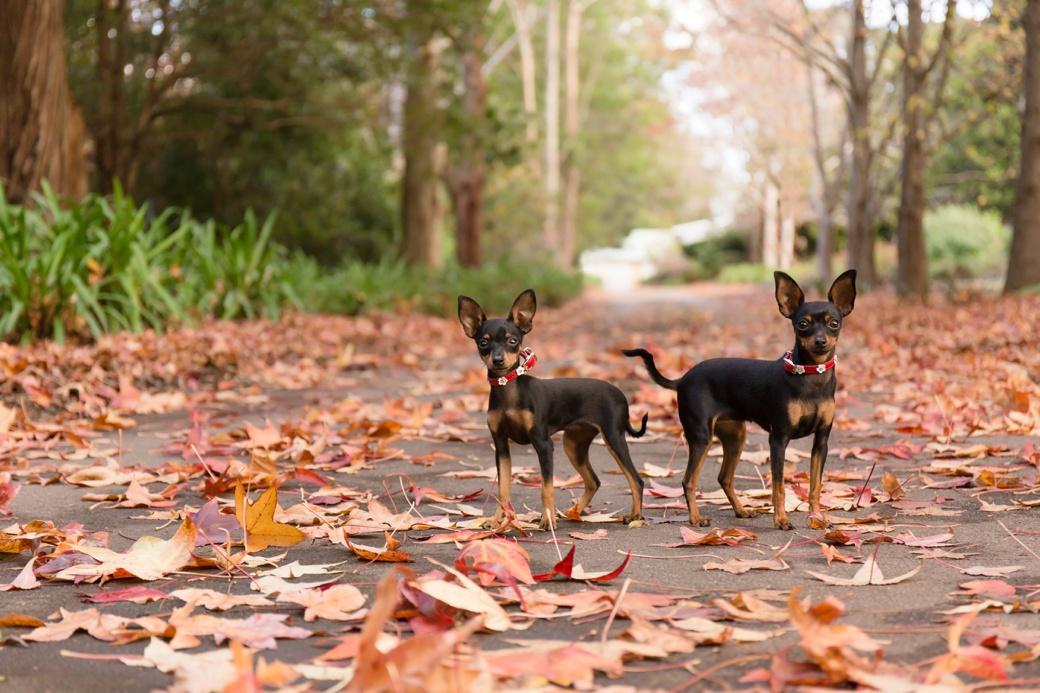 central coast dog photographer